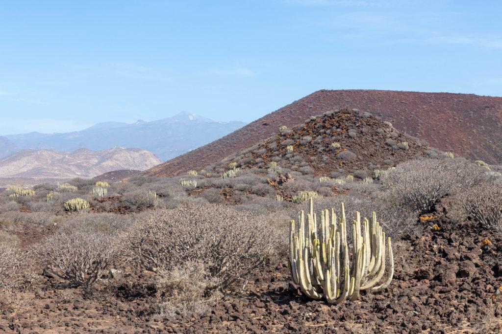 Conos volcánicos en el Malpaís de la Rasca y el Teide al fondo